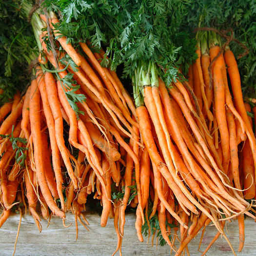 هویج فرنگی