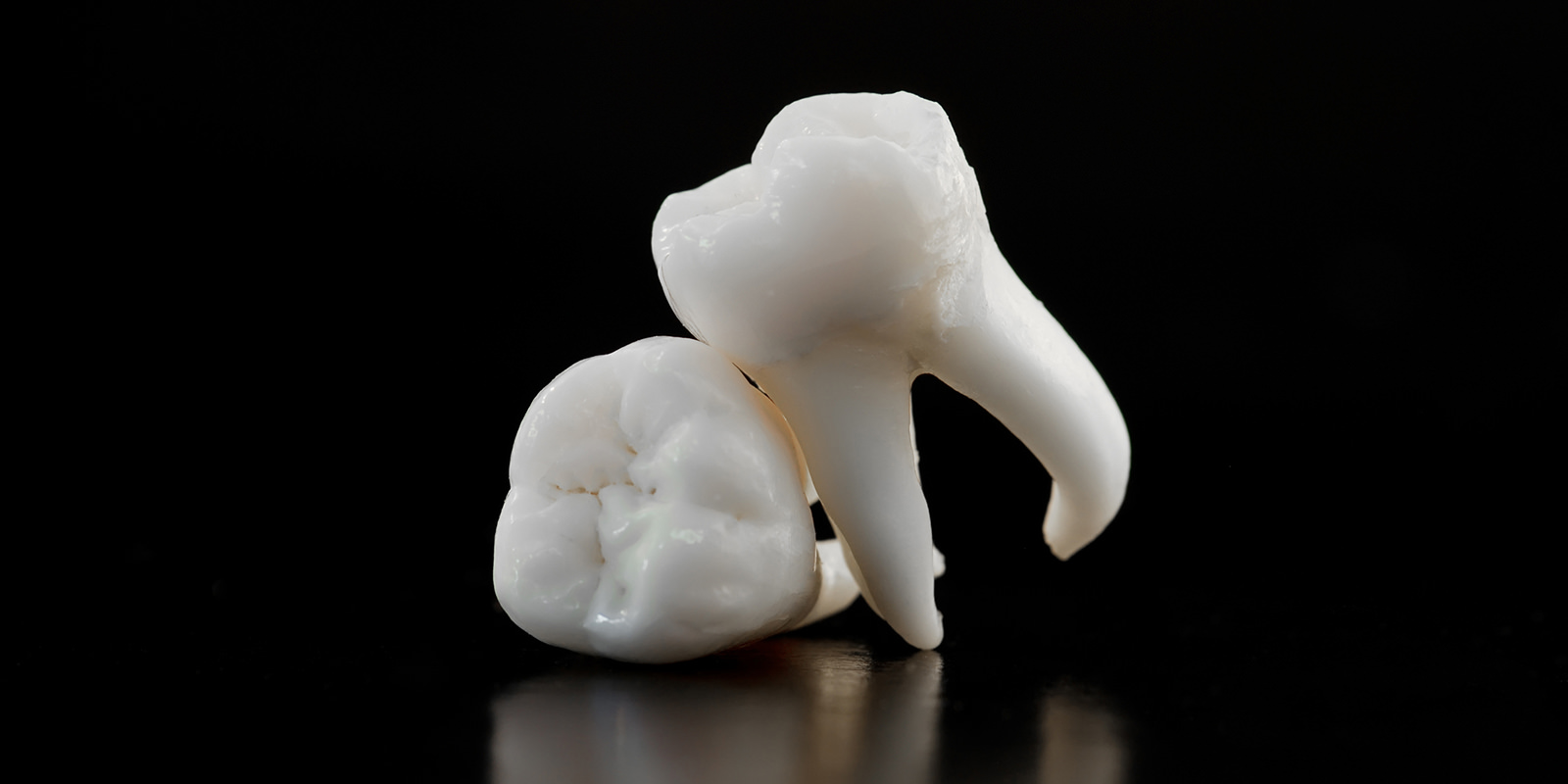 ماکت دندان عقل با ریشه ها